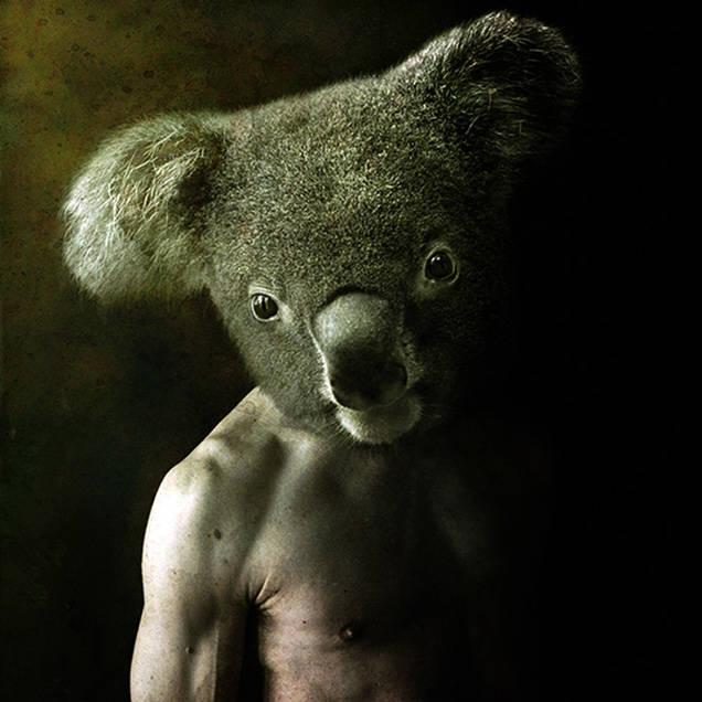 コアラとのハイブリット絶対強い