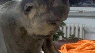 死してなお200年以上瞑想を続ける僧侶のミイラが発見される。
