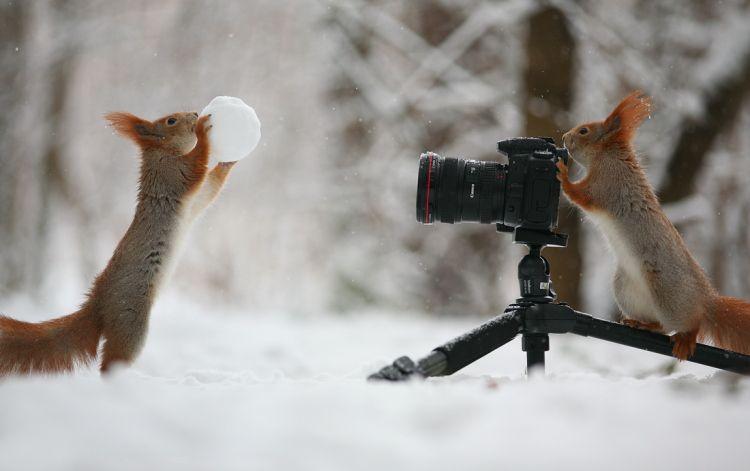 ロシアで撮影された2匹のリスが仲良く遊んでる写真が話題に
