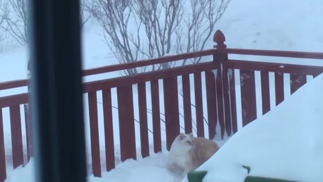 【突撃】迷子になった飼い猫が雪の中から現れる動画がまるで特殊部隊【エクストリーム入場】