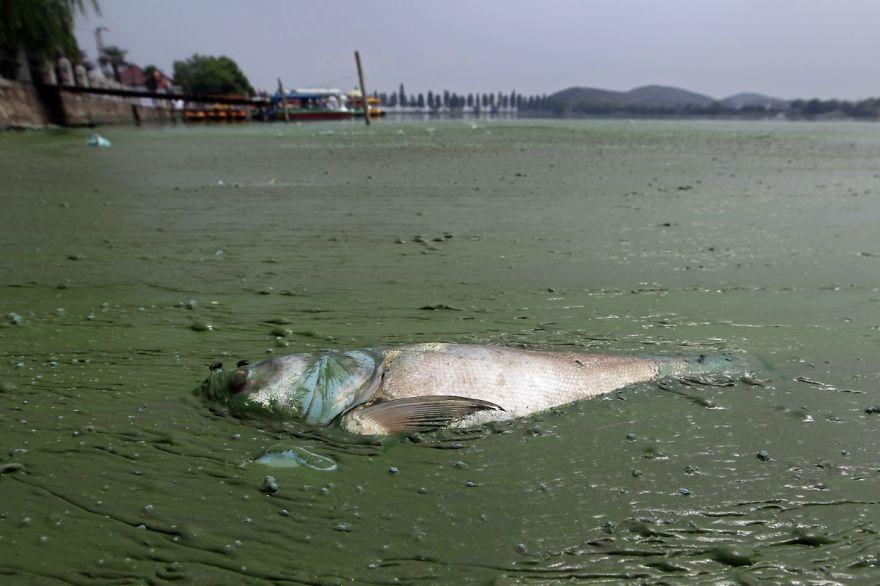 青みを帯びた藻と死んだ魚と