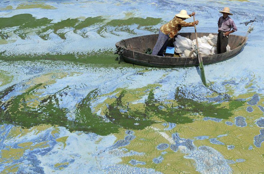 安徽省の藻だらけの湖