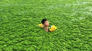 山東省 青島で藻で満たされた川?で泳ぐ少年