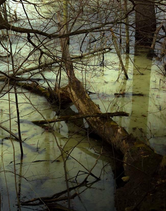 一体何の為に?沼に多数のドールが放置される。