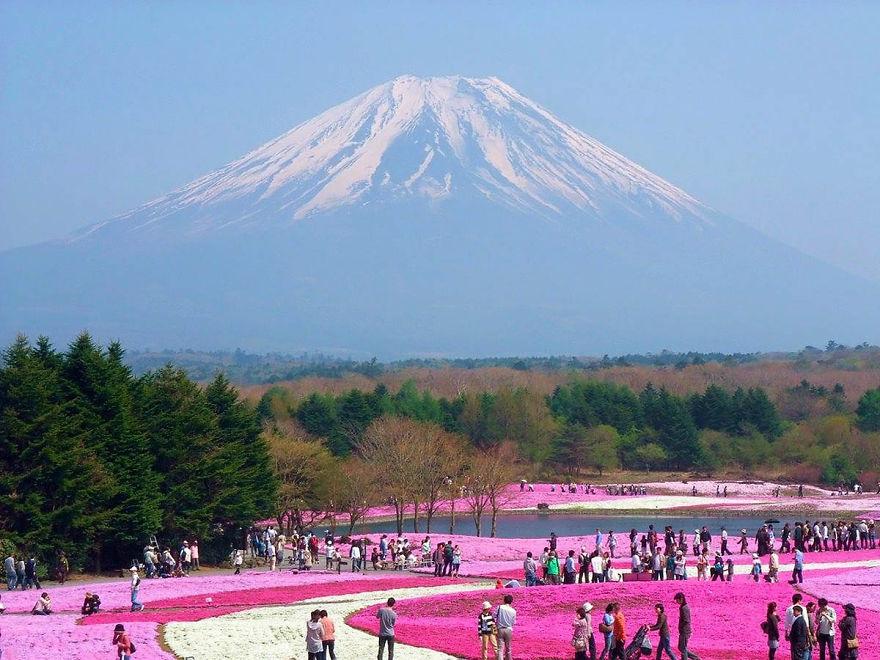 富士芝桜まつり 日本