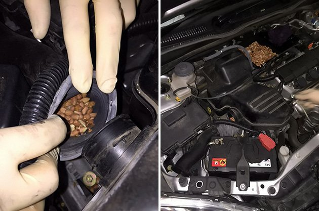 うちの車、なぜか時速60キロ以上でない!自動車を修理に出したら→なんだこれ!!
