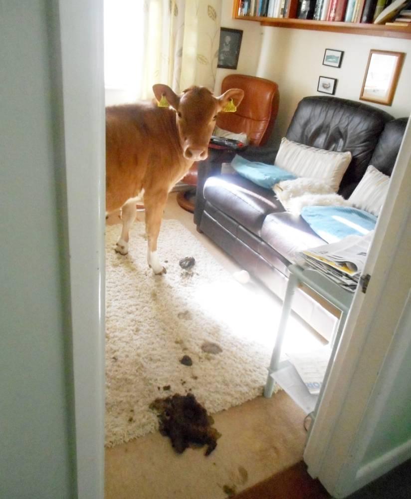 女性がシャワーから出たら、家の中に思わぬ来客者が現れる!