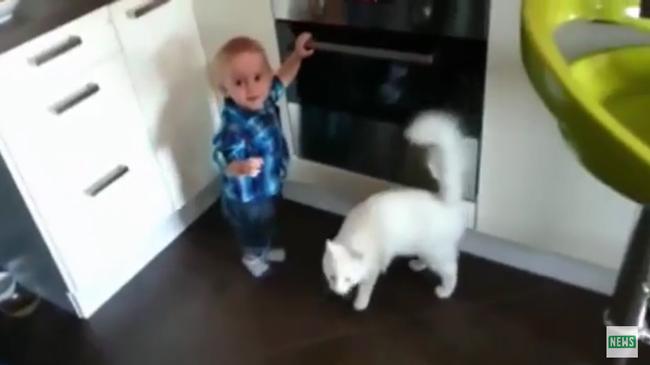 それ以上いけにゃい!赤ちゃんがオーブンを使うのを止めるネコが現れる