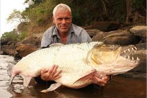 killer-fish-goliath-tigerfish-pictures3