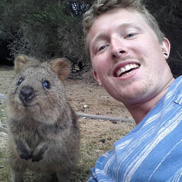 【世界の流行】クアッカワラビーとセルフィーするのが今、オーストラリアで流行中!!