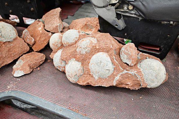 PAY-Dinosaur-egg-fossils