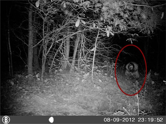 鹿狩り用に監視カメラをしかけたら、居るはずのない人が写りこんでしまう