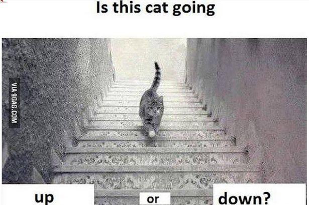 このネコの画像、階段を登ってる?降ってる?と話題になっているぞ