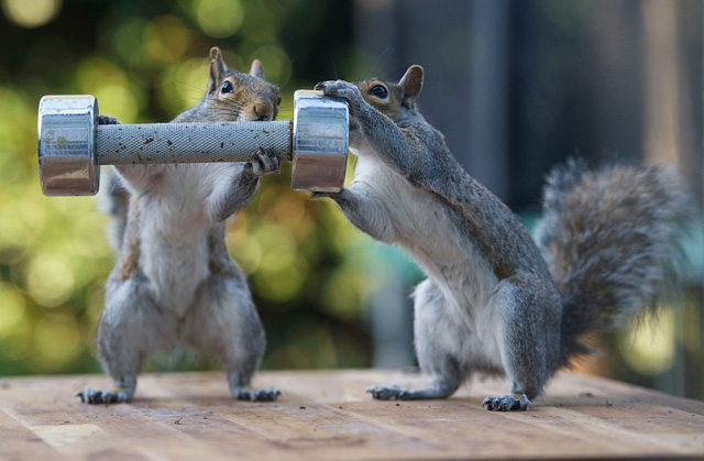 sPAY-Squirrels4