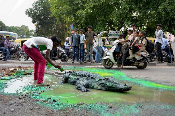 Crocodile-Art3