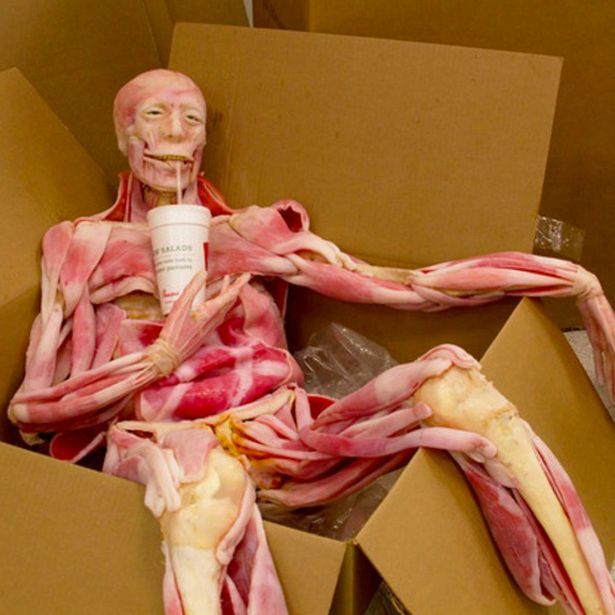 Cutting-Edge-Ultra-Real-Synthetic-Cadavers
