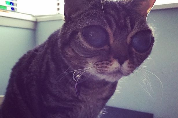 Matilda-the-cat-diagnosed-with-feline-leukemia-that-give-her-eyes-a-wide-glassy-appearance1