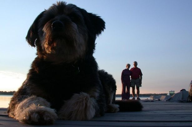 Gargantuan-sunset-dog