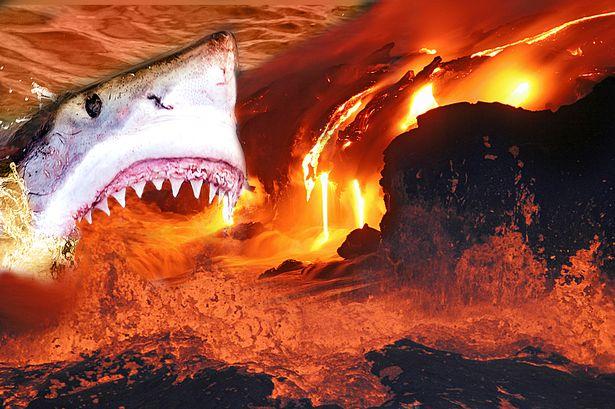 Main-VolcanoShark