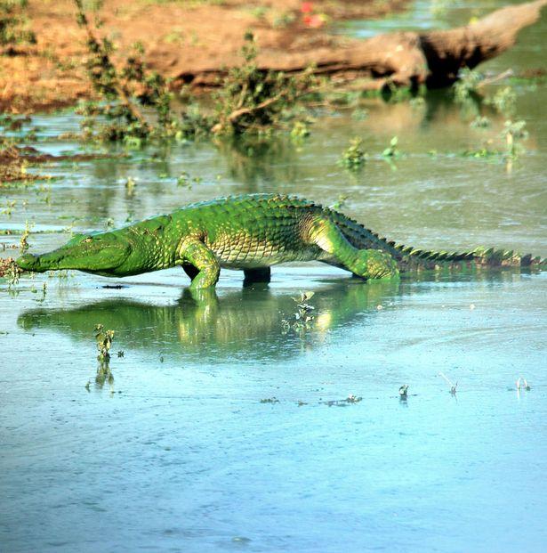 PAY-croc4