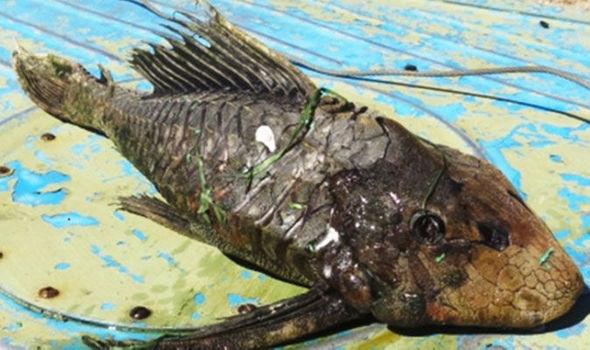 Russian-Fish-588134