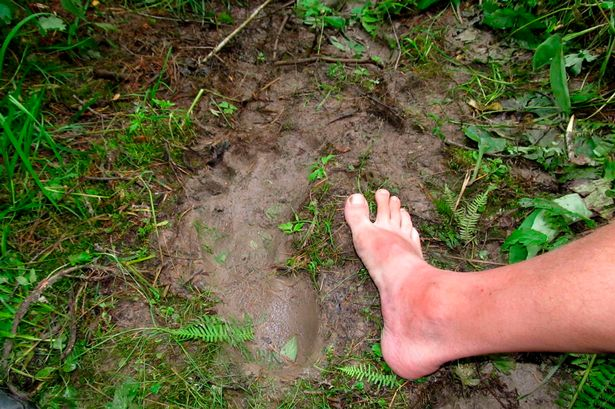 Yeti-footprints-3-must-credit-Andrei-Alexandrov-The-Siberian-Times-queries-Will-Stewart-007-985-998-94-00