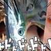 ピラニアだけじゃない!世界の恐ろしい殺人魚四天王が決定!