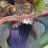 【世界の不思議】地球上に存在してるヘンテコ動物20種
